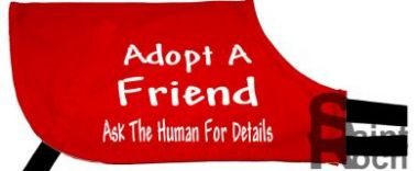 Adopt A Friend Ask The Human For Details